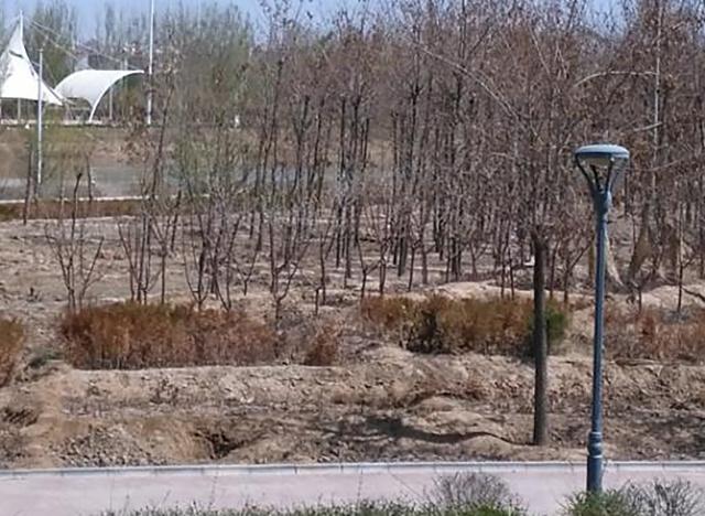 土壤改良技术_盐碱地土壤立体改良技术 让荒滩披绿装